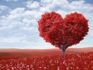 confidence affirmations, nature image with tree in heart shape and red leaves