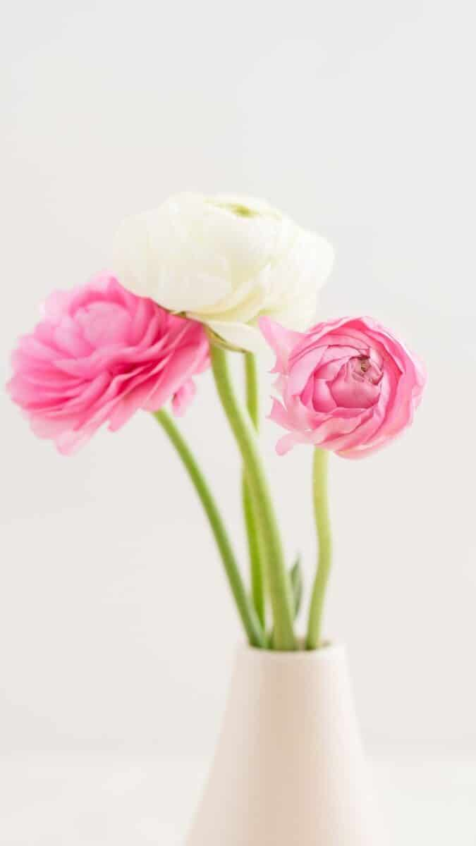 pink and white flowers wallpaper aesthetic, pink flower wallpaper iPhone