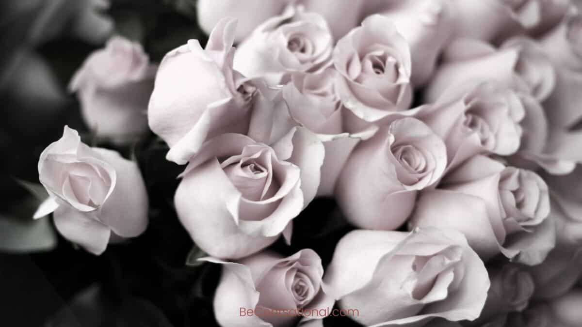 black and white Flower Wallpapers Wallpapers, flower Backgrounds for desktop