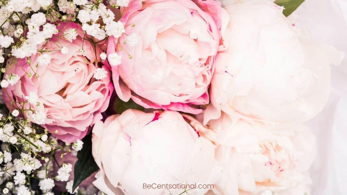 peony Flower Wallpapers Wallpapers, flower Backgrounds for desktop