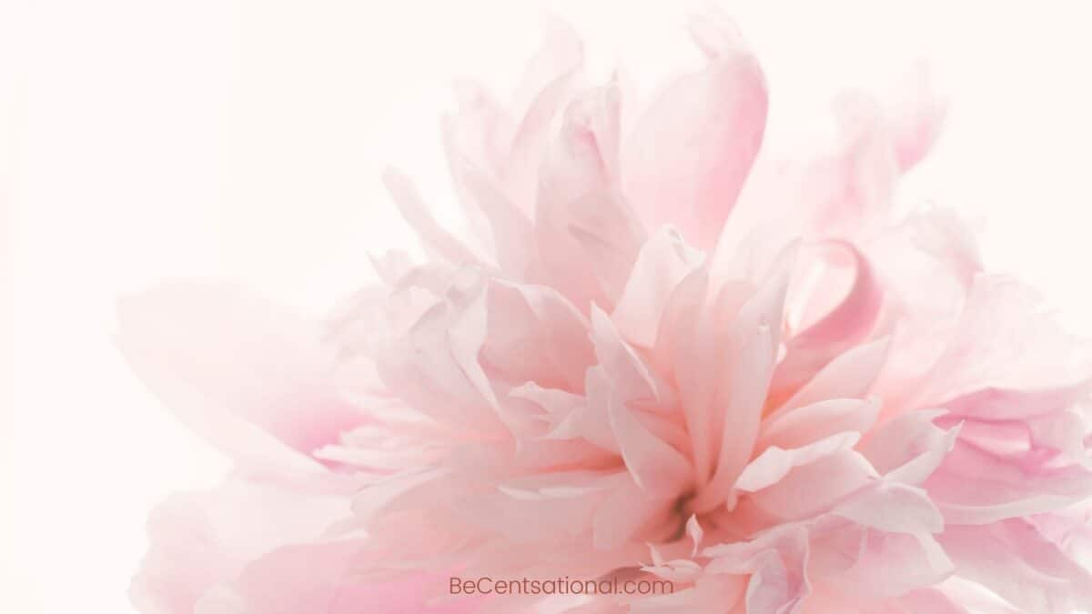pink peony Flower Wallpapers Wallpapers, flower Backgrounds for desktop