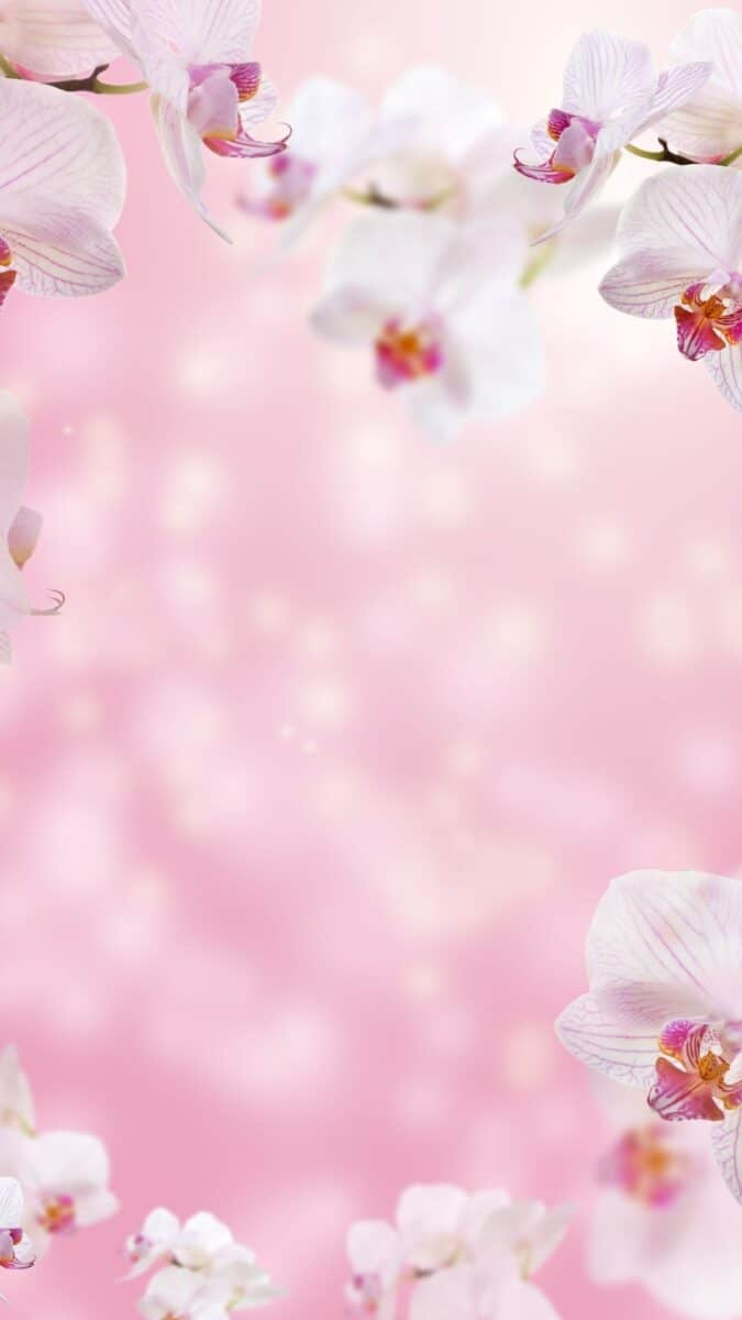 flower background for iPhone