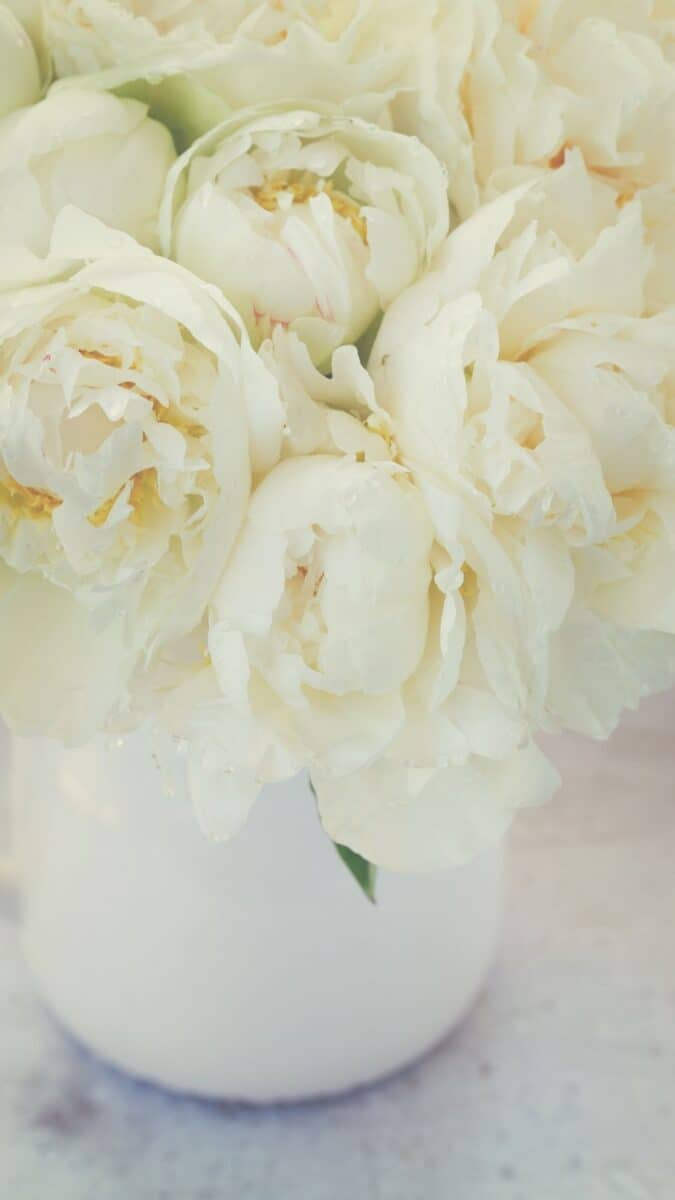 white peony floral wallpaper aesthetic, pink flower wallpaper iPhone