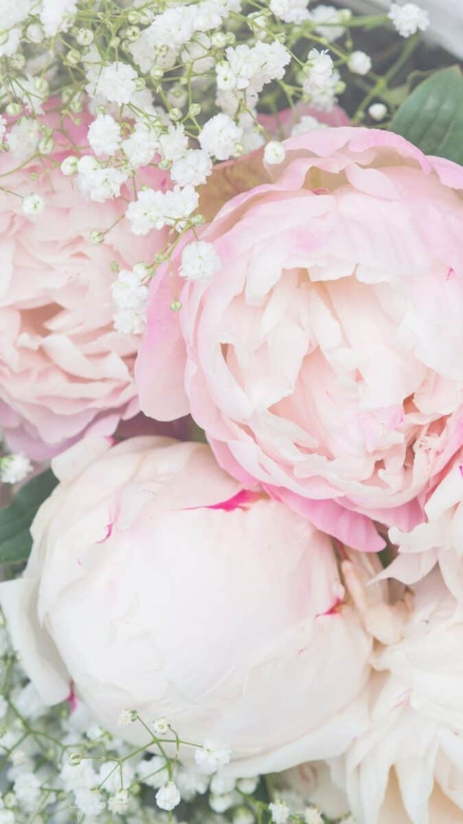 soft pink peony wallpaper aesthetic, pink flower wallpaper iPhone