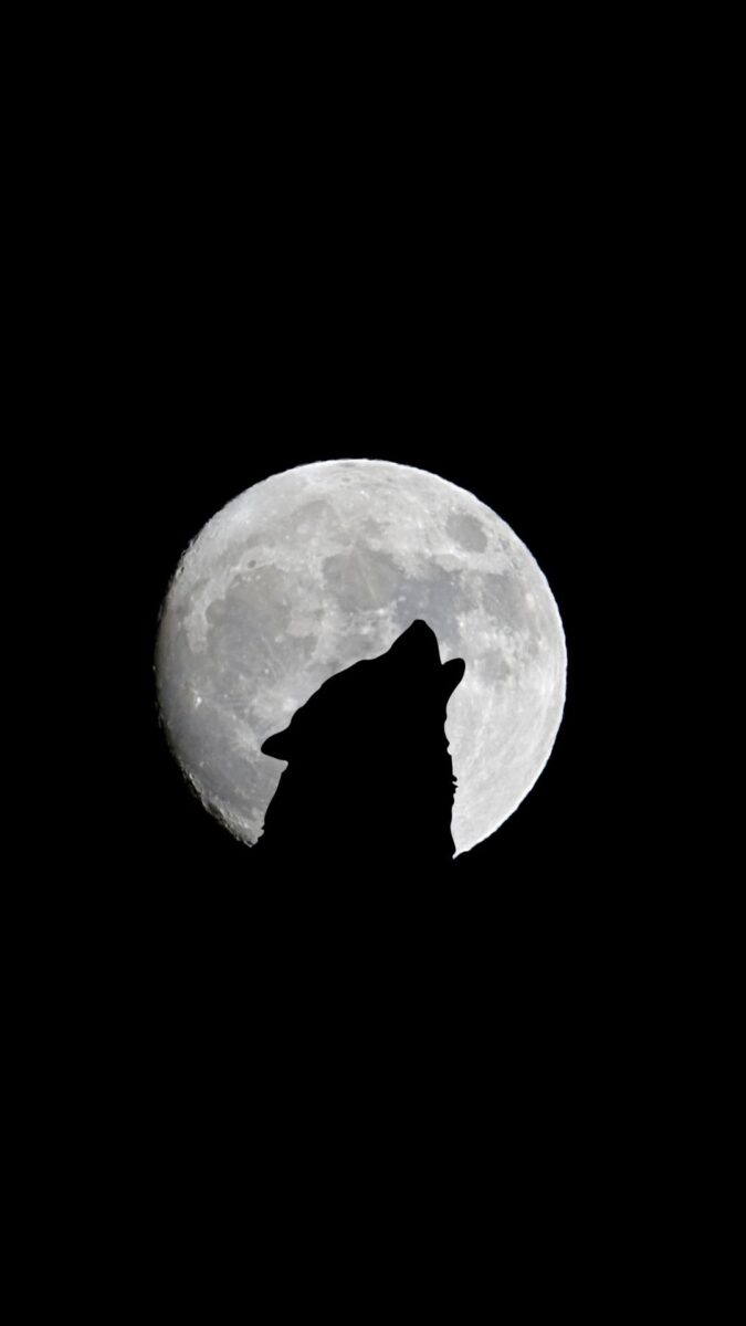 wolf hauling at moon Black Aesthetic Wallpapers