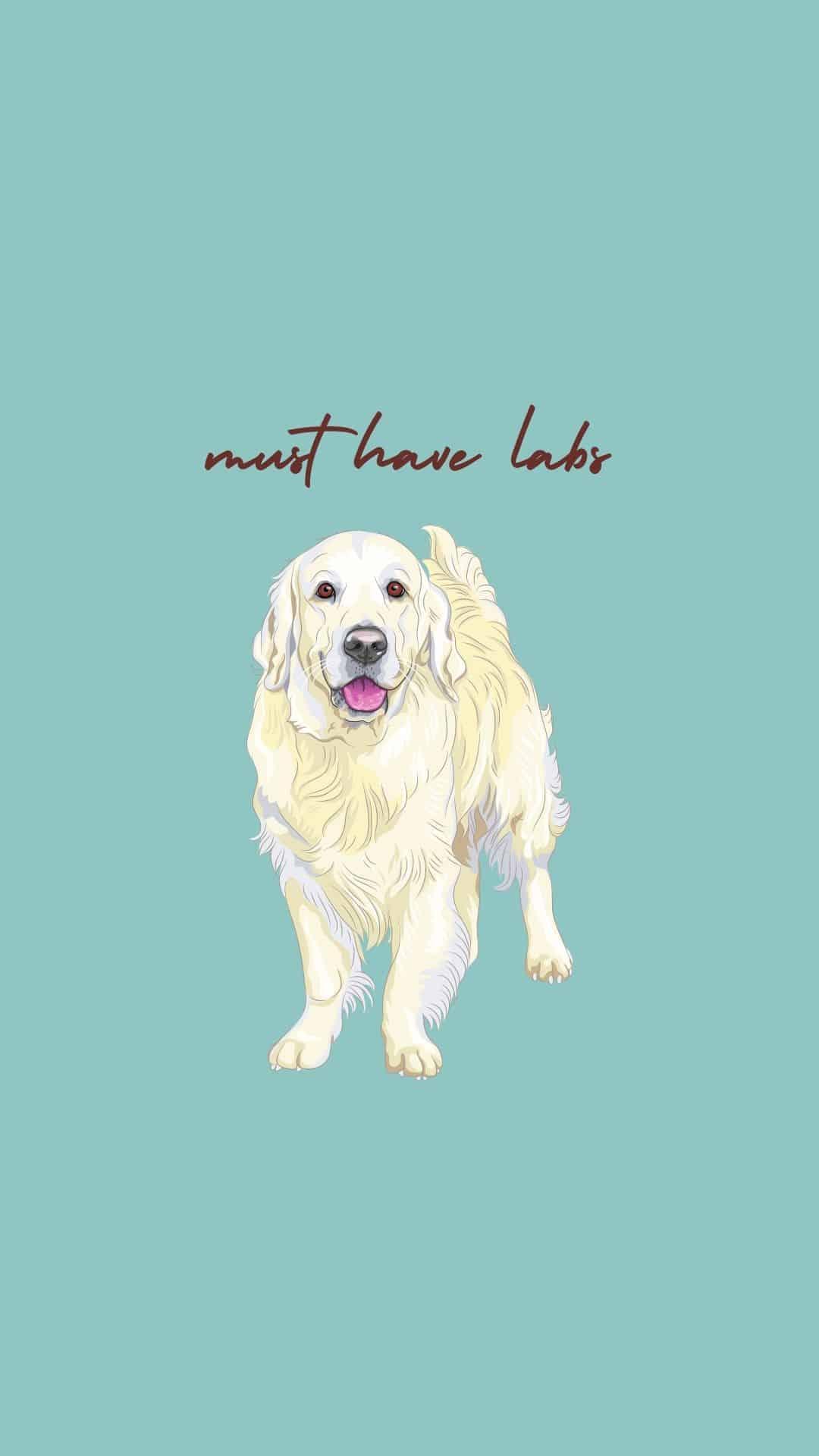 labrador dog on blue background