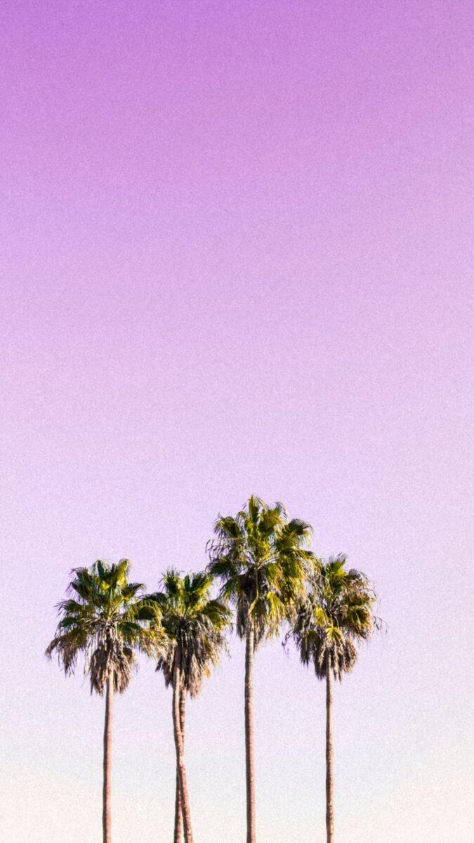 Summer iPhone Wallpaper